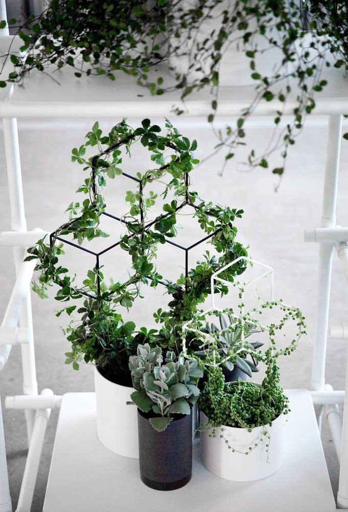 Olha como ficou fofa essa pequena trepadeira combinando com vasos de diferentes plantas.