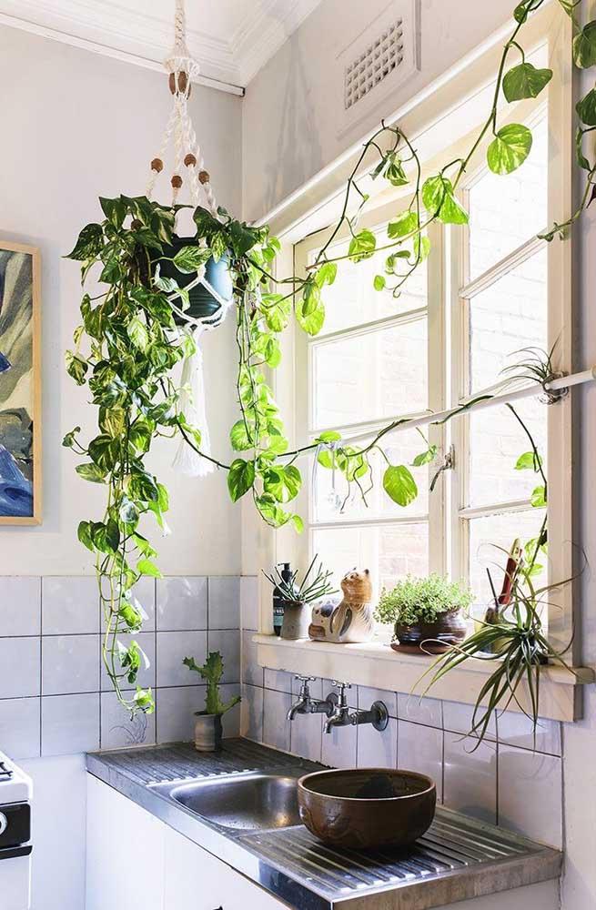 O que acha de pendurar um vaso e colocar uma trepadeira bem no meio da cozinha?