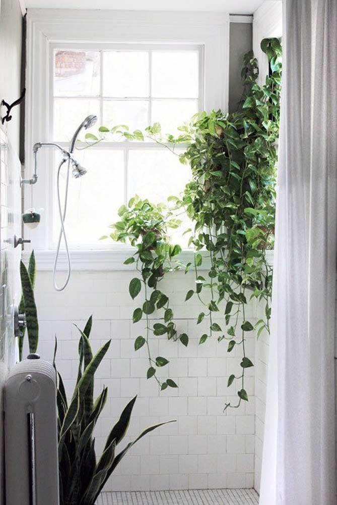 Até no banheiro você pode fazer uma decoração usando uma trepadeira que cresce para baixo.