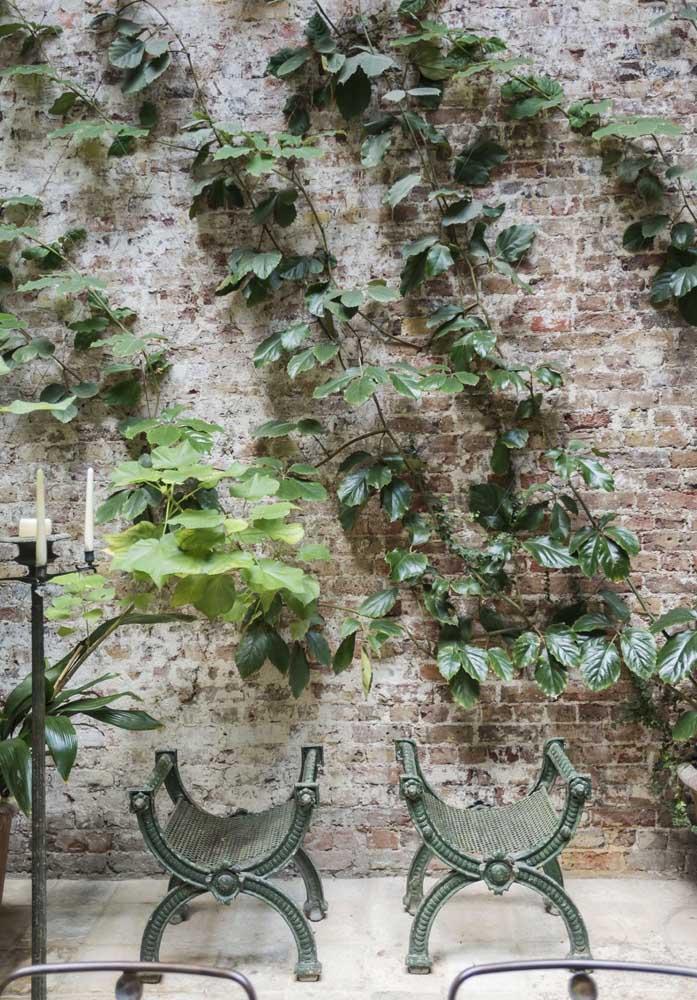 Saiba que é possível decorar a parede com uma trepadeira artificial que mais parece algo natural.