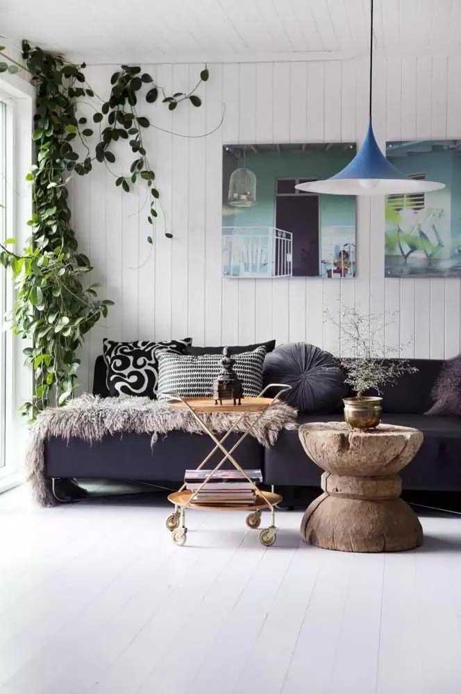 Que tal colocar uma trepadeira unha de gato no cantinho da sala de estar para deixar o ambiente mais arejado?