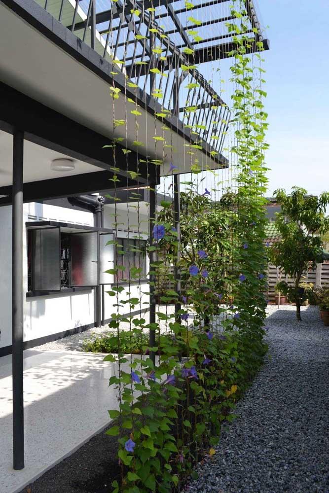 Uma boa opção de decoração com trepadeira é deixá-la crescer verticalmente como se fosse uma parede.