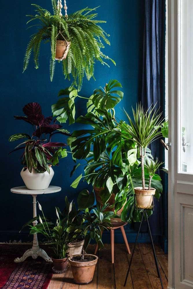 Pequena urban jungle no canto da sala e é claro que a Costela de Adão marca presença no local