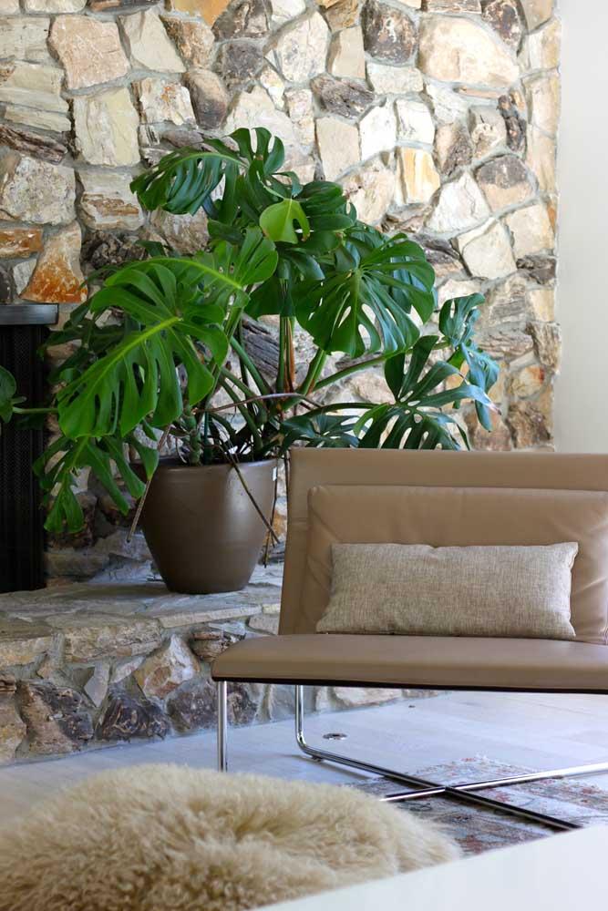 A rusticidade da parede de pedras ficou perfeita junto com o vaso de Costela de Adão