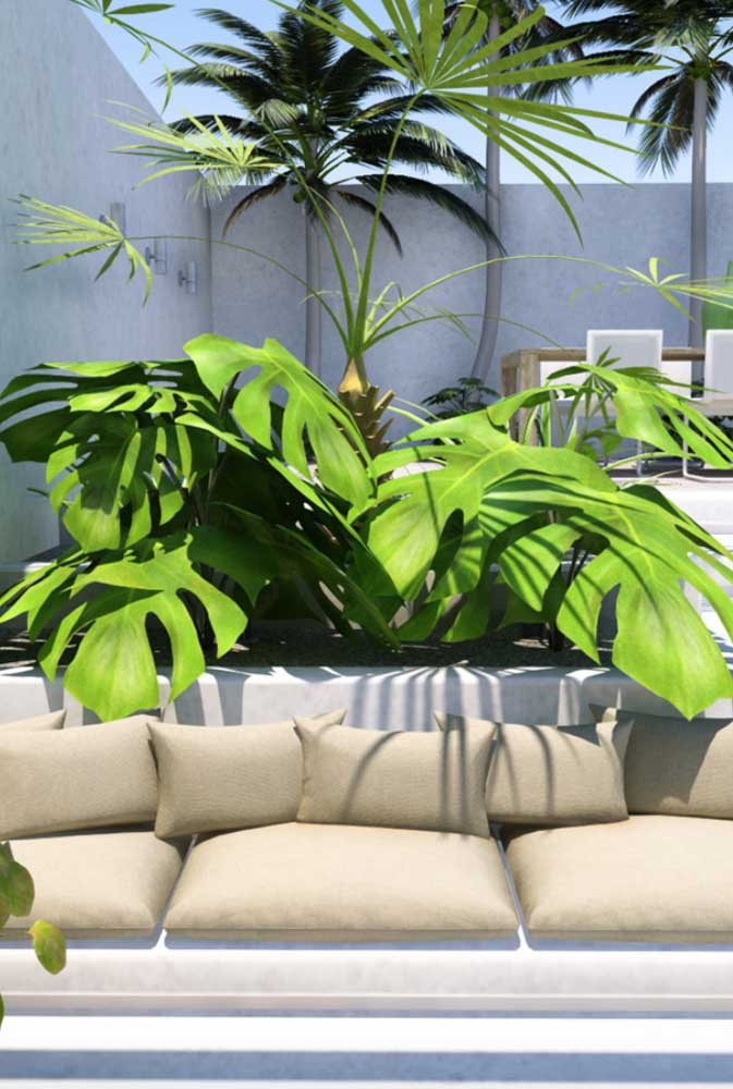 Costela de Adão na área externa, protegidas do sol pelas plantas maiores