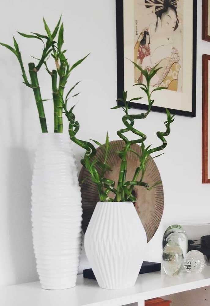 Vasos de cerâmica de diferentes tamanhos podem ser escolhidos para plantar o Bambu da Sorte