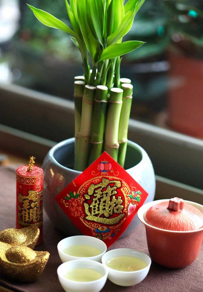 A cultura oriental é uma grande propagadora do Bambu da Sorte, especialmente pelo Feng Shui