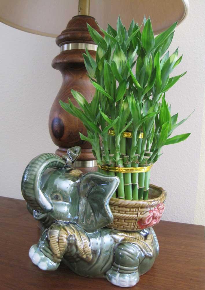 Lindo vaso para o Bambu da Sorte, remetendo a cultura oriental indiana