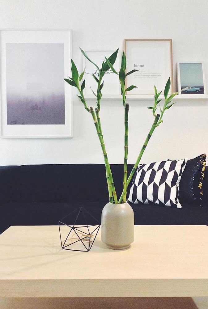Esse Bambu da Sorte ganhou um vaso pequeno de cerâmica e as folhas foram podadas ao longo dos caules