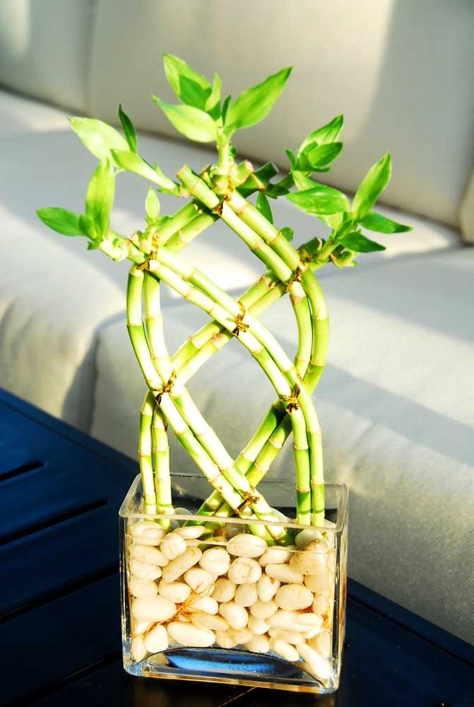 São diversas as opções de formato e desenho para trabalhar o caule do Bambu da Sorte