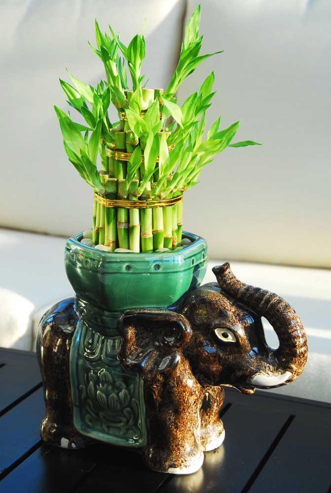 Bambu da Sorte em vaso de elefante, feito em cerâmica, perfeito para quem quer trazer sorte para a casa
