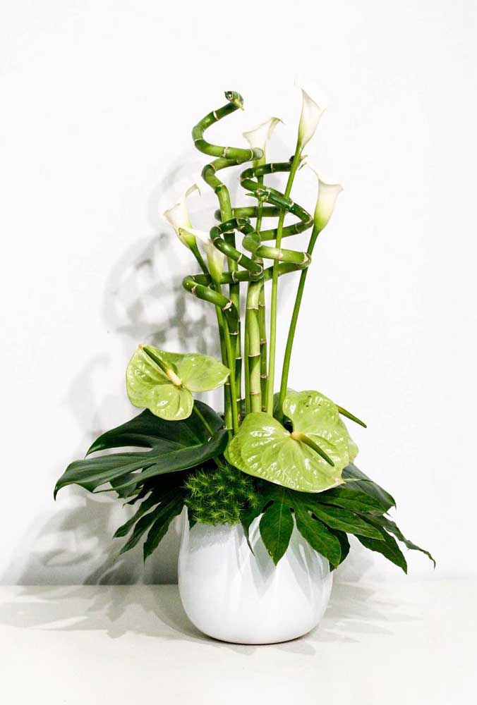 O Bambu da Sorte também pode ser plantado com outras plantas de raízes pequenas, como o antúrio