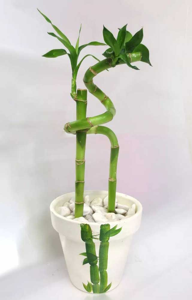 Aqui, a pintura do vaso também tem um Bambu da Sorte