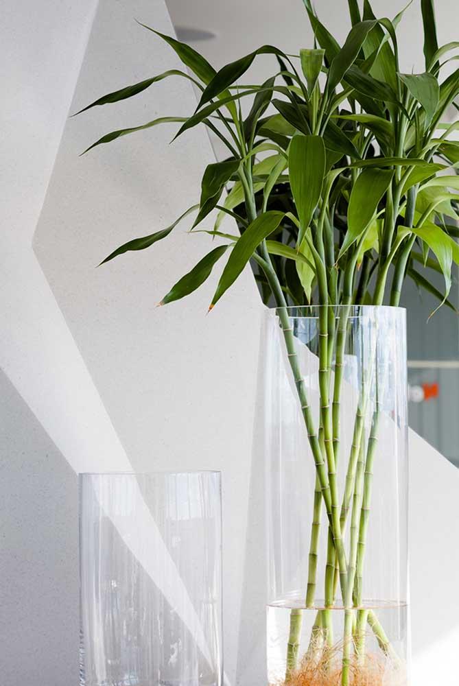 Vasos de vidro mais fundos também recebem bem o Bambu da Sorte