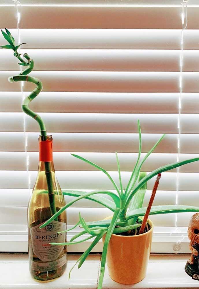 Inspiração de Bambu da Sorte plantado em garrafa de vidro reutilizável