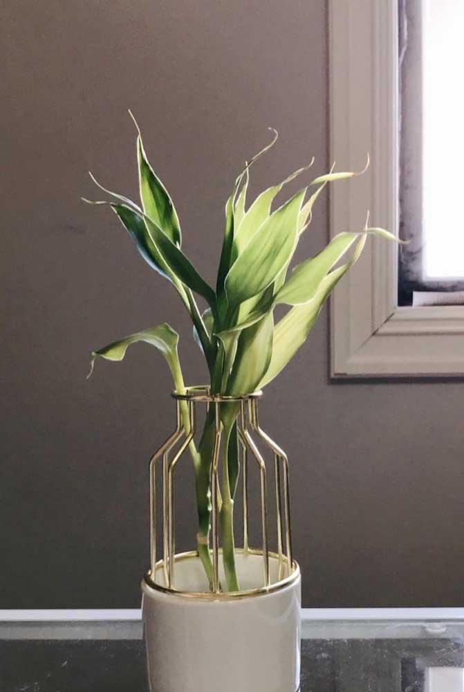 Um vaso lindíssimo para deixar aparente as folhas do Bambu da Sorte