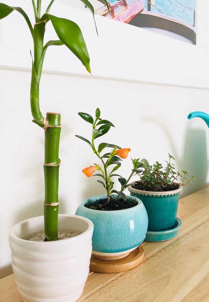 Bambu da sorte solitário em vaso de cerâmica