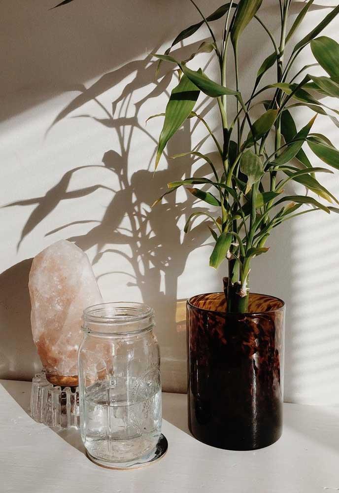 Vaso de vidro fumê para o Bambu da Sorte cheio de folhas