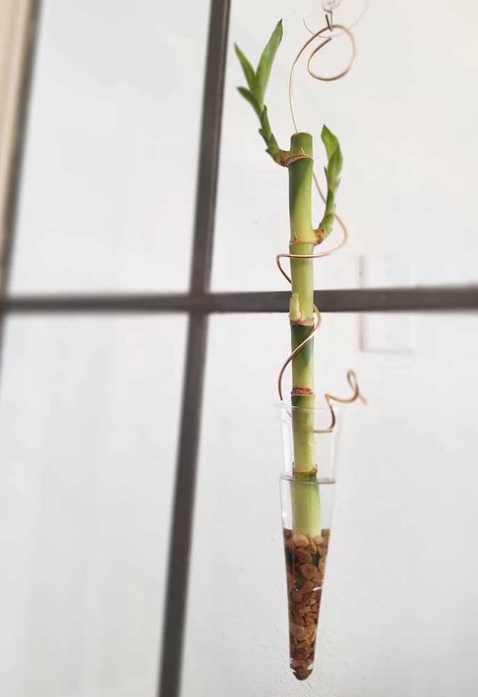Ampola suspensa com Bambu da Sorte