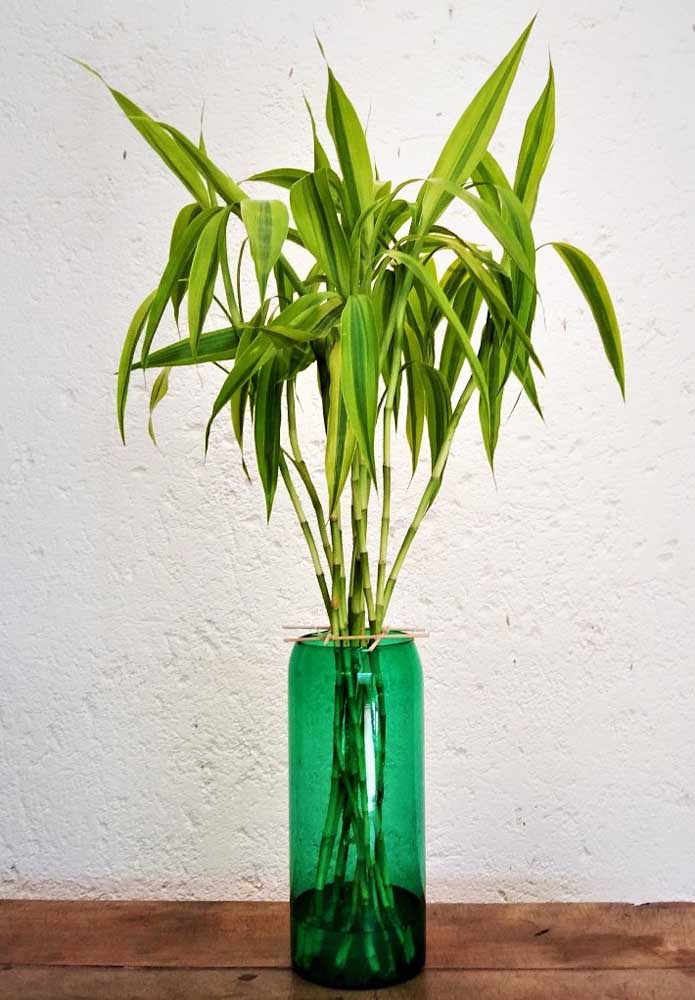 Bambu da Sorte em vaso de vidro verde