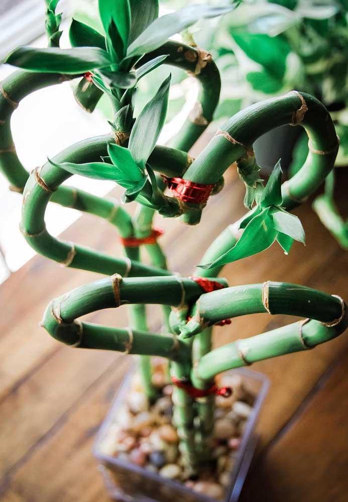 Com arames e linhas delicadas é possível fazer ornamentos com os caules do Bambu da Sorte