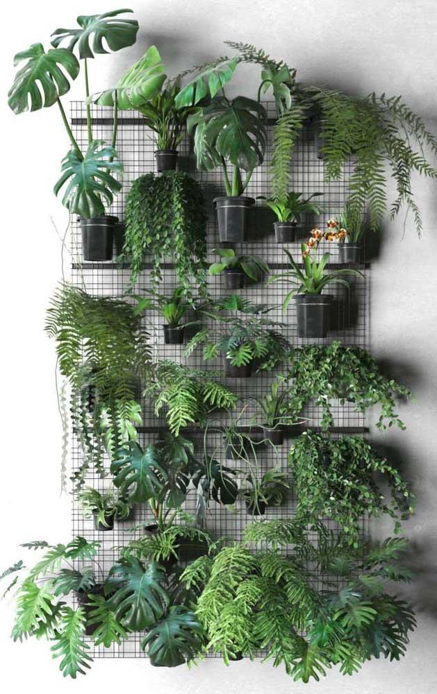 Jardim vertical de samambaias e costelas de adão: uma combinação maravilhosa