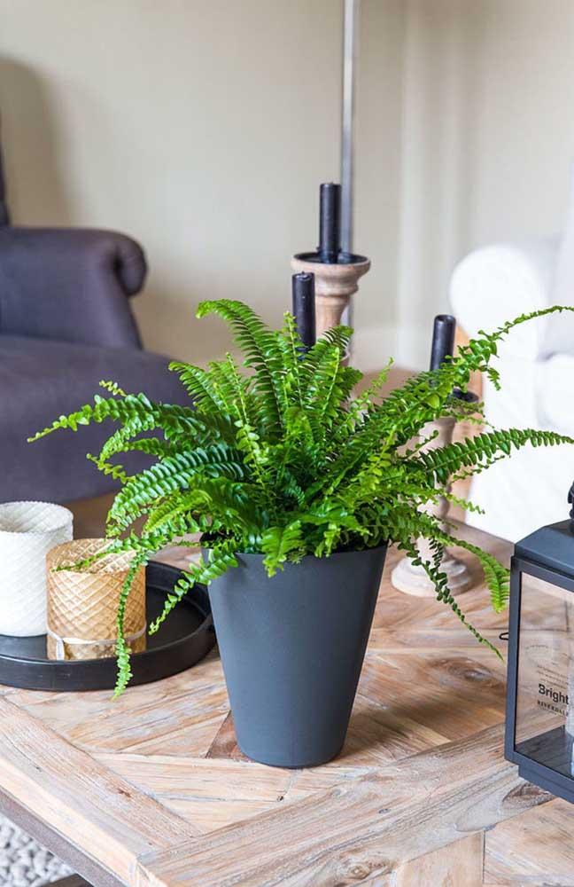 A decoração clean e sóbria dessa sala de estar trouxe o verde exuberante da pequena samambaia sobre a mesa