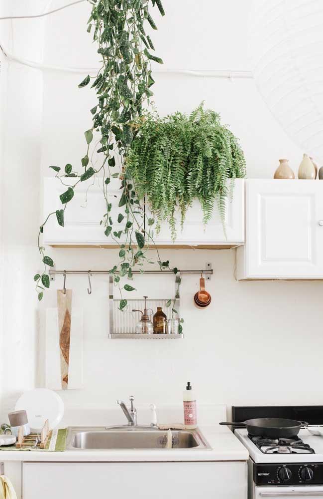 O armário aéreo da cozinha se tornou o lugar perfeito para a linda e viçosa samambaia americana