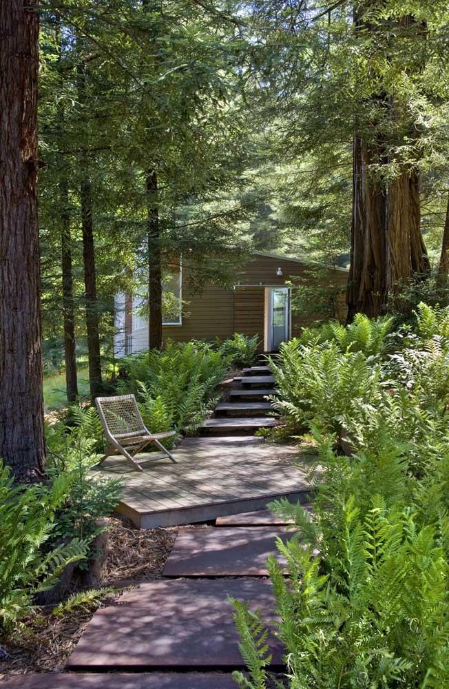 Uma casinha no campo adornada por samambaias; repare que aqui elas estão em casa, vivendo sob a sombra das árvores