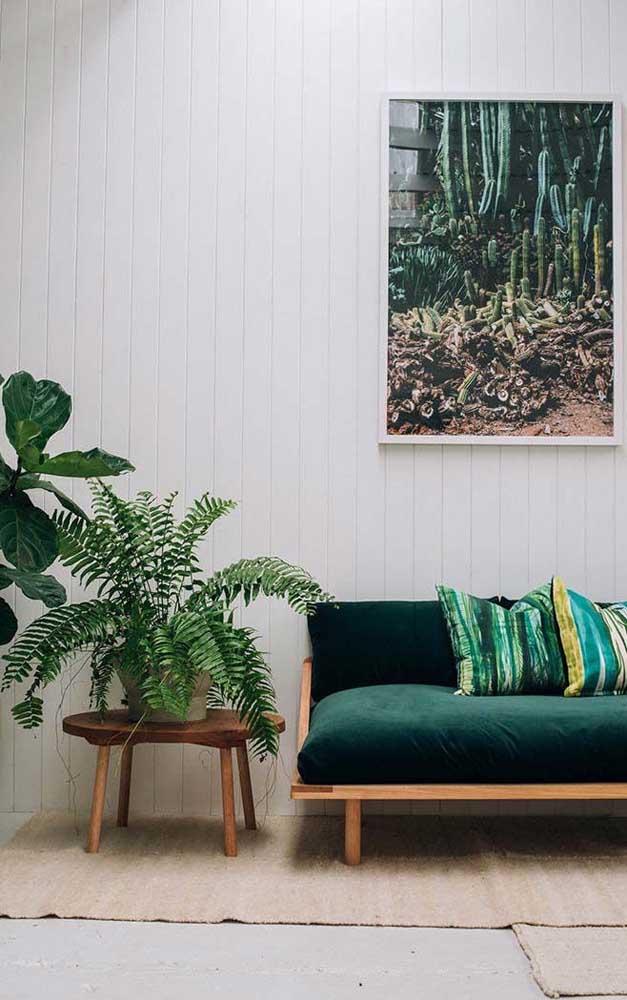 Samambaia amazonas na decoração da sala de estar