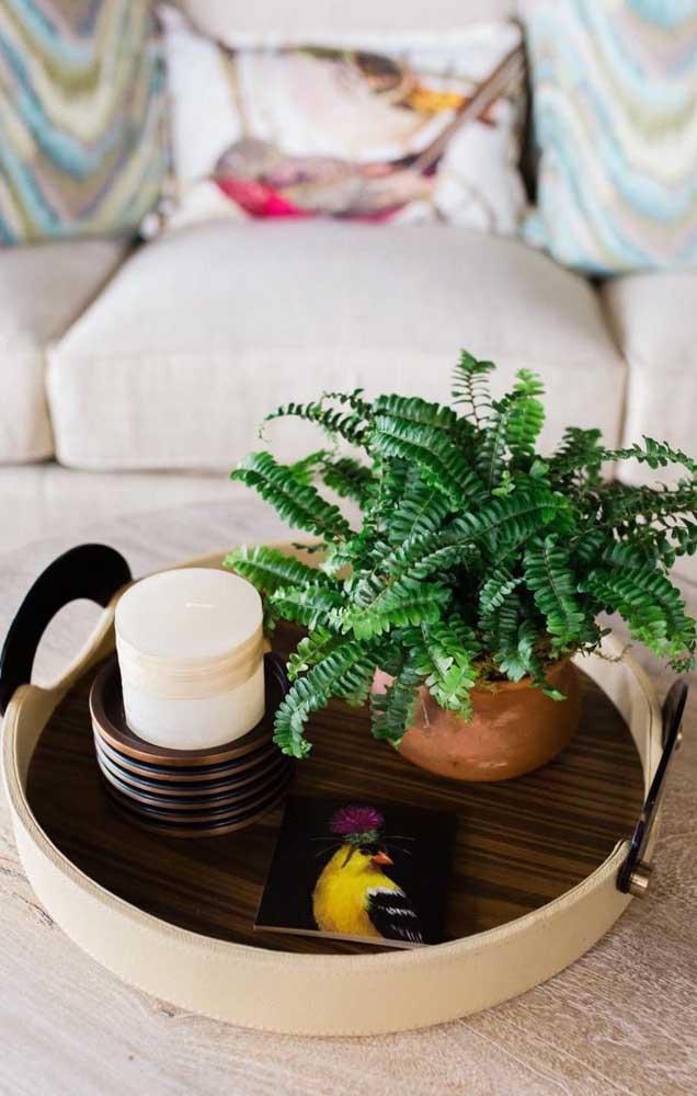Um vasinho pequeno de samambaia para decorar a mesinha de centro