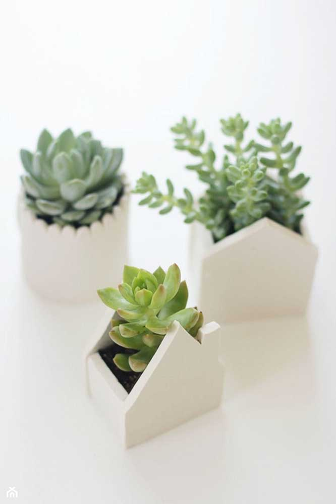 Você pode colocar as plantas suculentas dentro de vasinhos com formato de caixinhas como nesse caso.