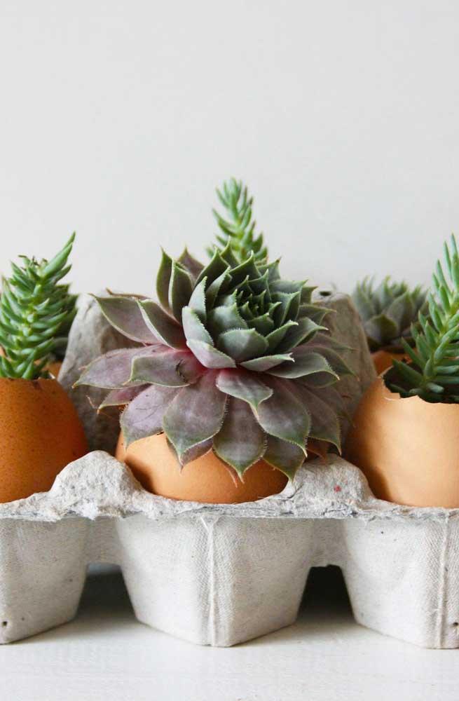 Que tal trabalhar com materiais reciclados na hora de cultivar planta suculenta? O ideal é fazer isso com as mini suculentas.