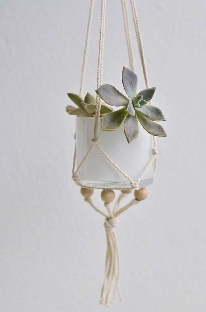 Se você deseja cultivar a suculenta em vasos pendurados, saiba escolher a melhor espécie.