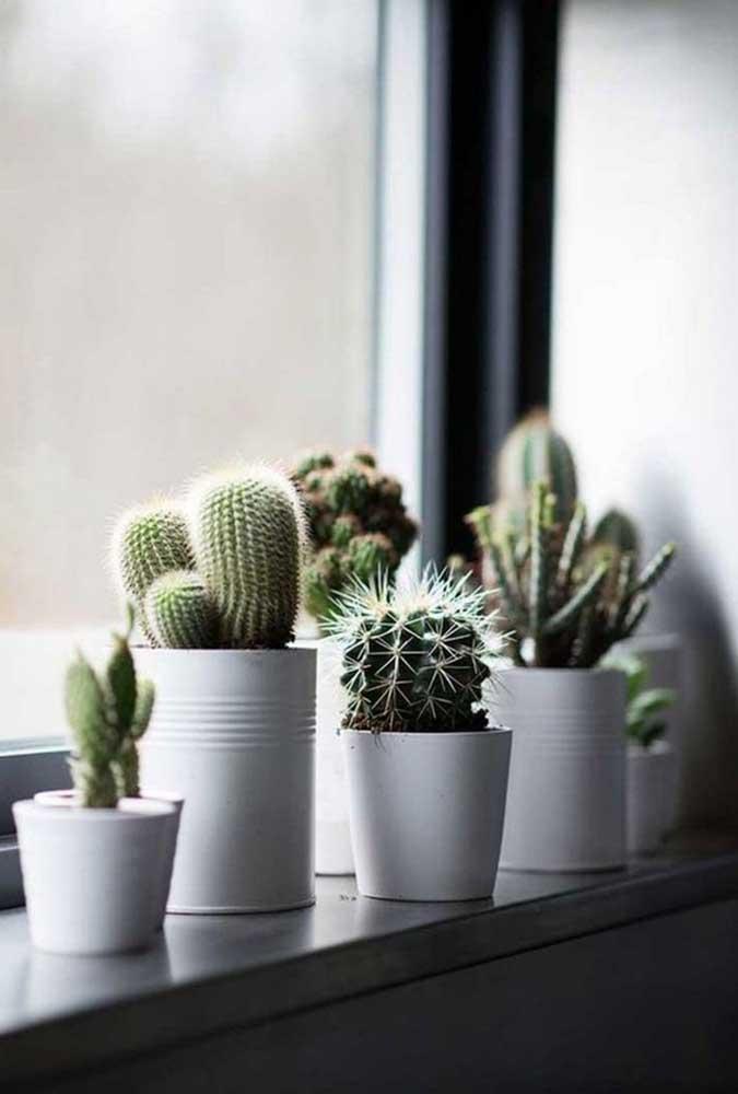 Olha como fica lindo organizar os vasinhos de suculentas na janela de sua casa. É um ótimo lugar para elas receberem a luz natural.