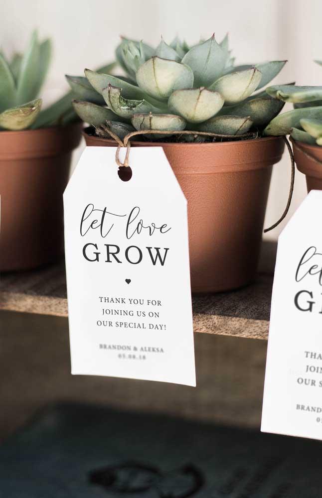 Que tal oferecer uma suculenta como lembrancinha da sua festa de casamento? Uma bela recordação desse momento.
