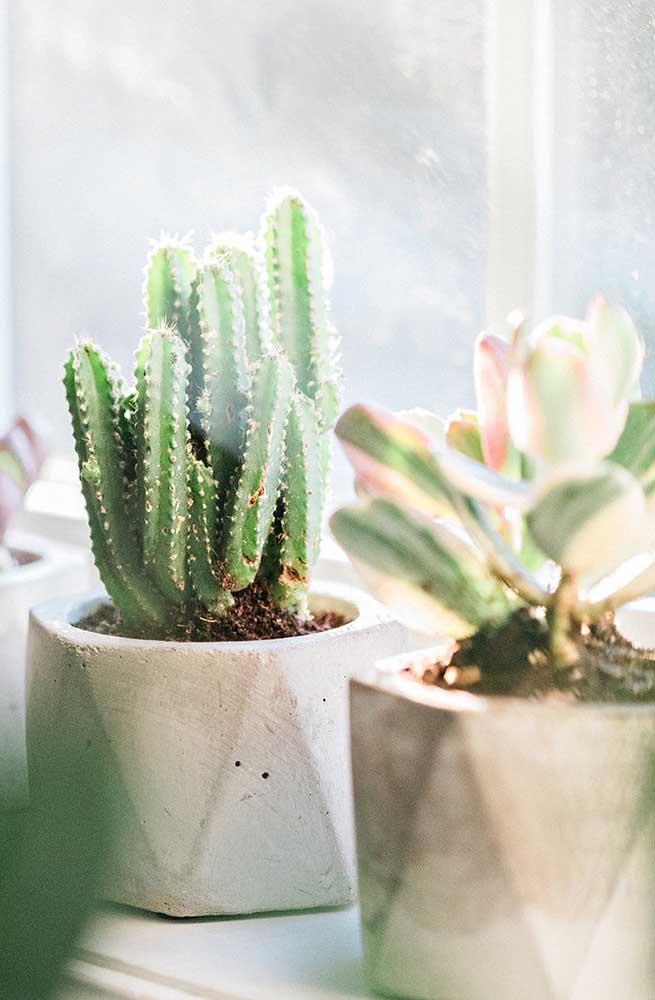 Para preparar o solo e fazer com que a planta cresça de forma saudável, você precisa colocar substratos para suculentas.