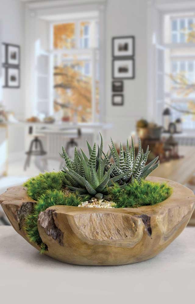 ara deixar as suculentas crescerem de forma saudável, nada melhor do que criar um espaço natural para elas.