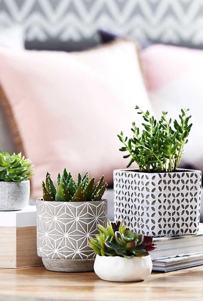 Para destacar as suculentas, escolha vasos com desenhos diferenciados e tamanhos que valorizam a planta.
