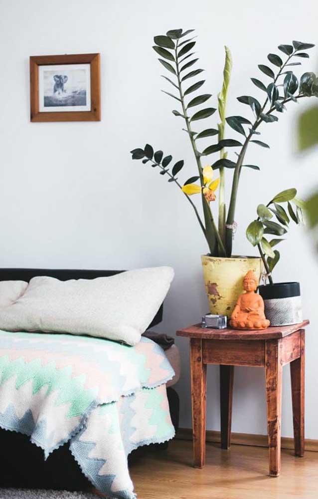 Zamioculcas na decoração do quarto do casal, ao lado da cama