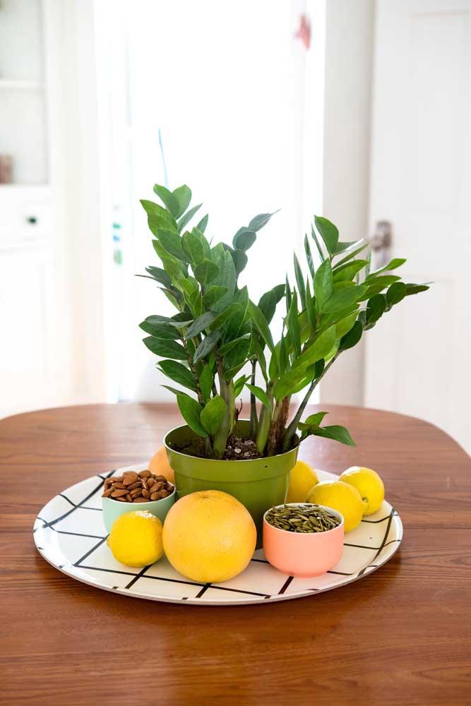 Zamioculcas na fruteira