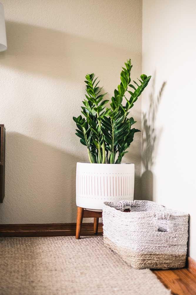 Escolha um vaso de tamanho proporcional a sua zamioculcas, lembrando que quanto mais espaço, mais a planta cresce