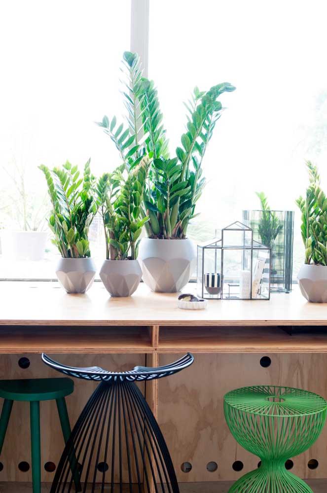 Uma linda inspiração de decoração com zamioculcas: quatro vasos com a planta em uma única bancada