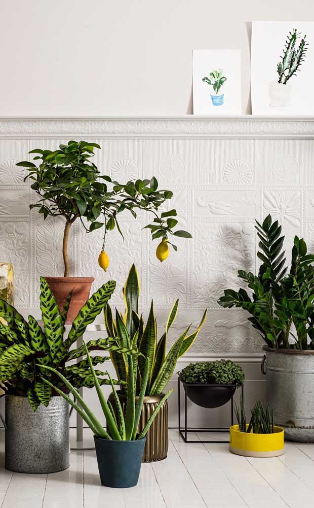 Nesse outro espaço da casa, também cheio de plantas, a zamioculcas se destaca pelo tamanho