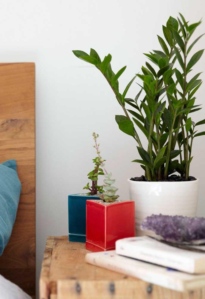 A zamioculcas é uma linda opção de planta para se cultivar no criado mudo do quarto