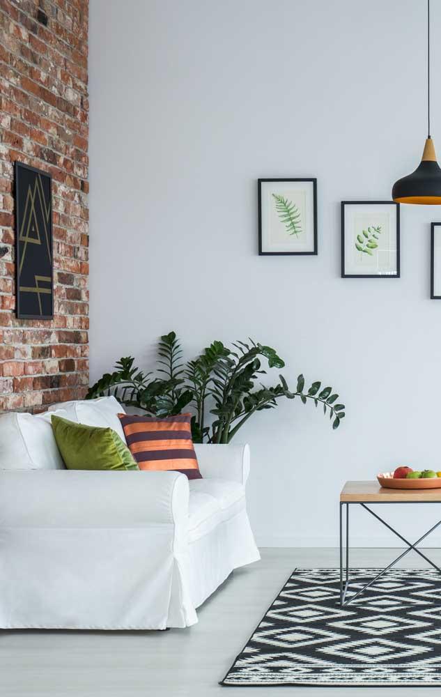 Que belo exemplar de zamioculcas para sala de estar; para chegar a esse tamanho, a planta pode levar anos