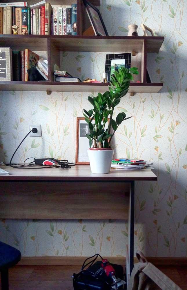 As versões menores da zamioculcas podem ser muito bem aproveitadas em mesinhas de escritório e escrivaninhas