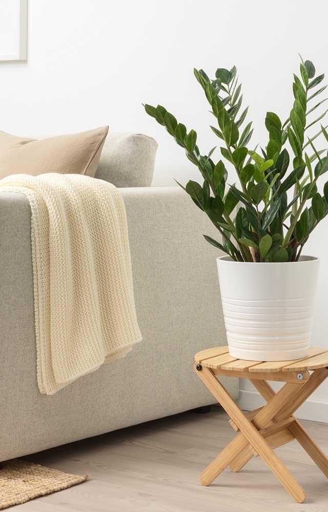 Um cantinho perfeito para a zamioculcas na sala de estar: ao lado do sofá