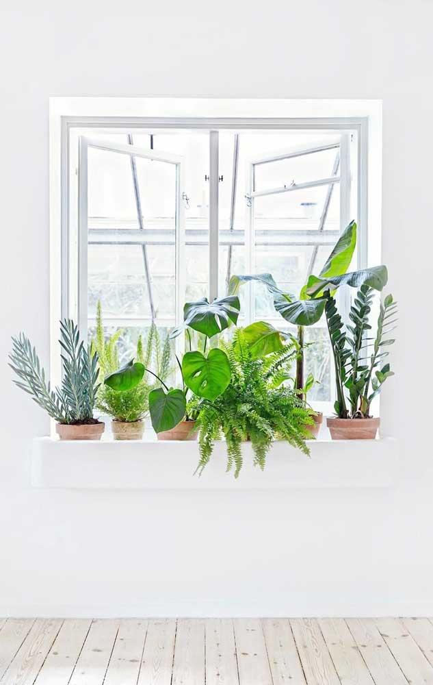 Jardim verde na janela feito com zamioculcas, samambaias e costela de adão, as plantas da vez