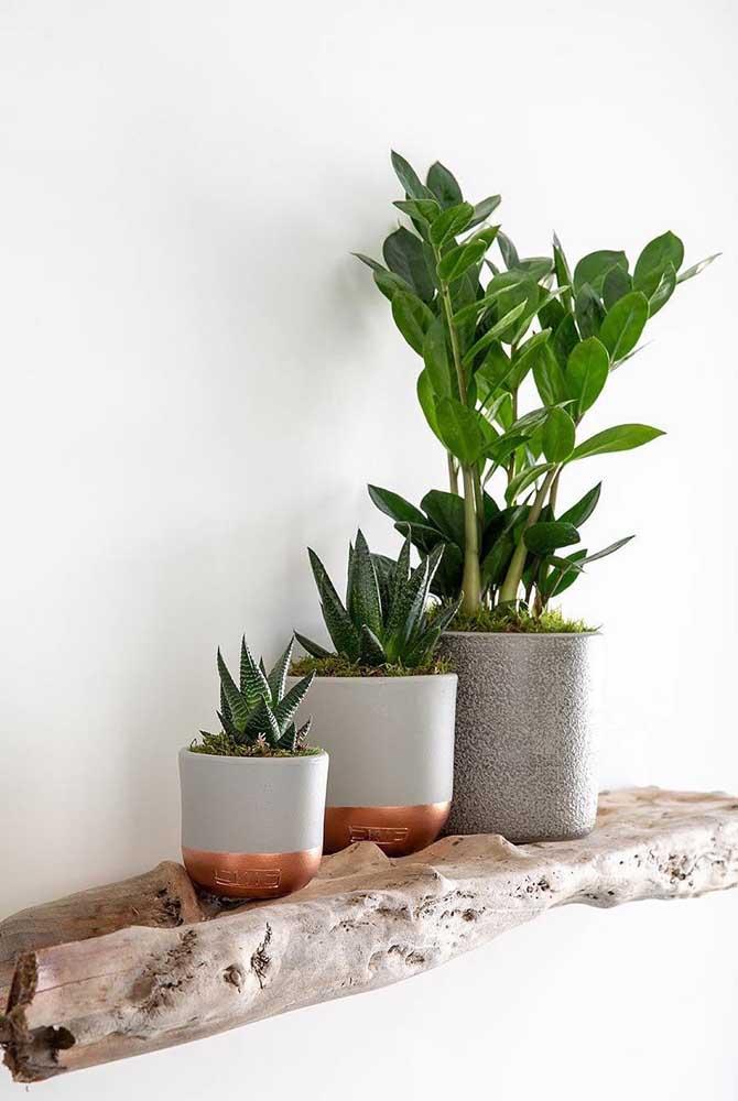 Escadinha de vasos nessa decoração, do menor, com o cacto, até o maior, com a zamioculcas